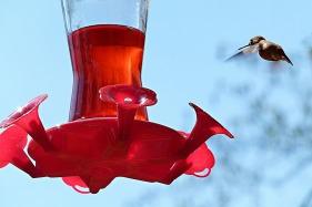 hummingbird-53917_1280